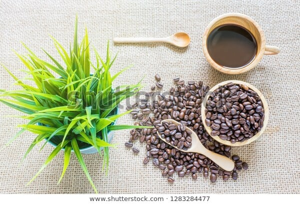 What is the Impact of the Roasting Process on Coffee Bean Plant?